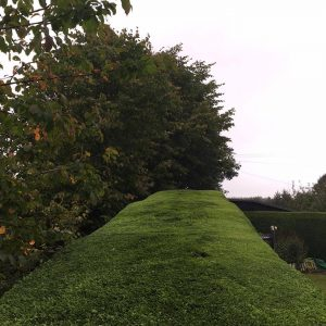 Hedge Management